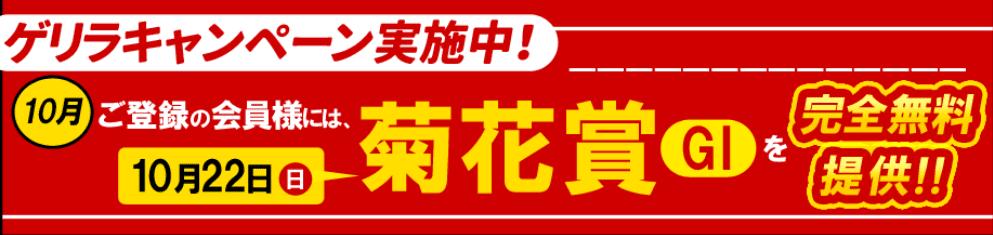 菊花賞の無料情報
