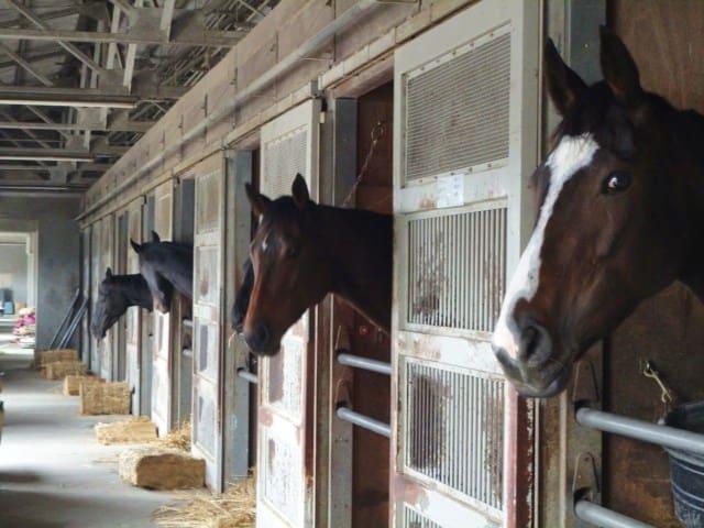 厩舎 馬房
