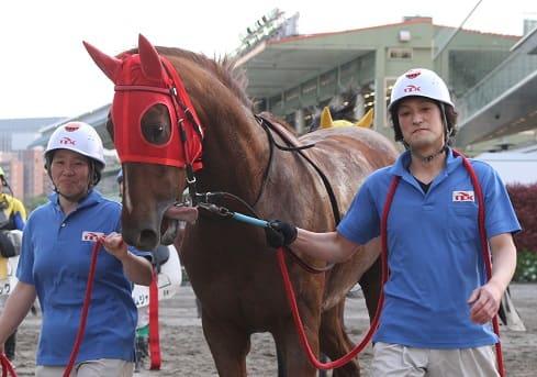 厩務員 競走馬