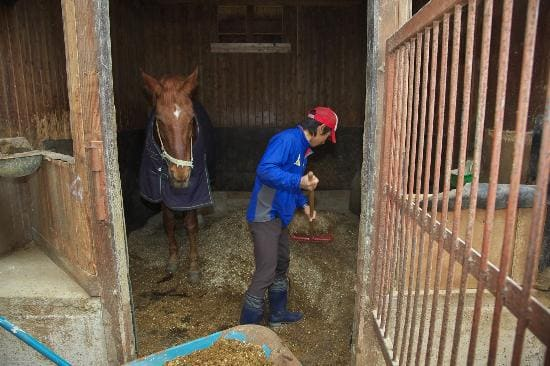 厩務員の仕事 馬房の清掃