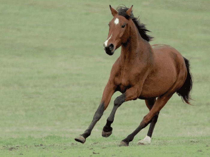 競走馬 マッチェム系