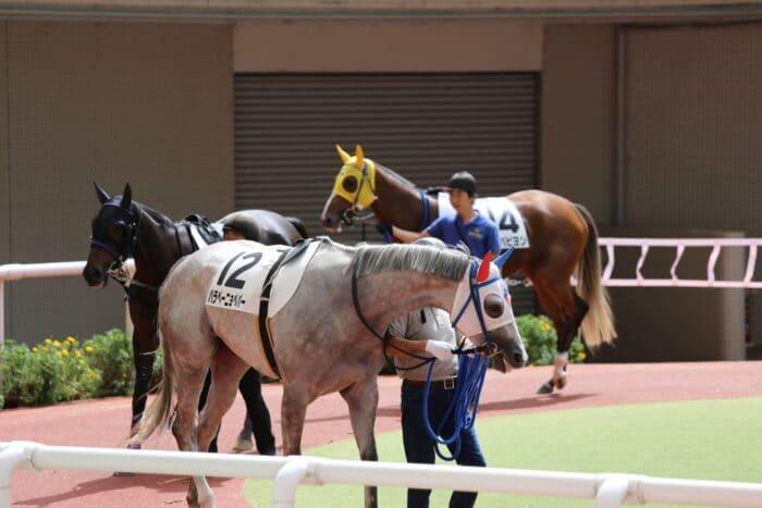 ベスト馬体重は500キロ
