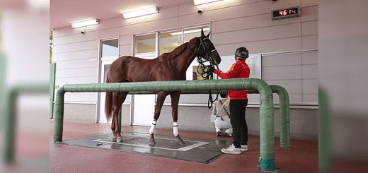 馬体重が多い方が成績が良いは本当