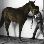 競馬 馬体重